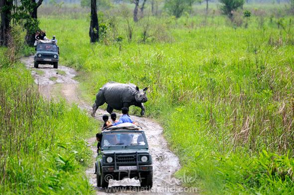 Rhino crossing vehicles