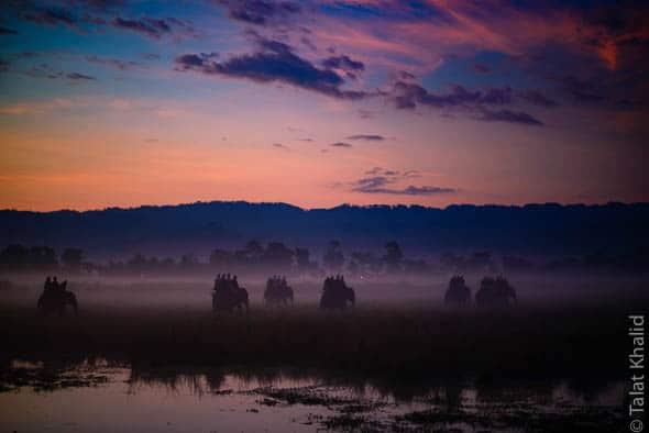 Kaziranga Morning Safari