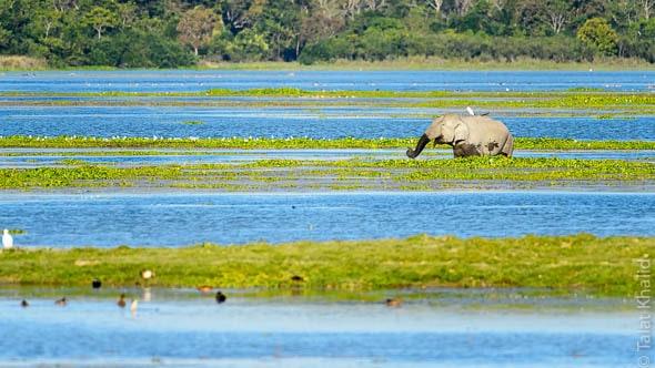 Elephant Scape Kaziranga Lake